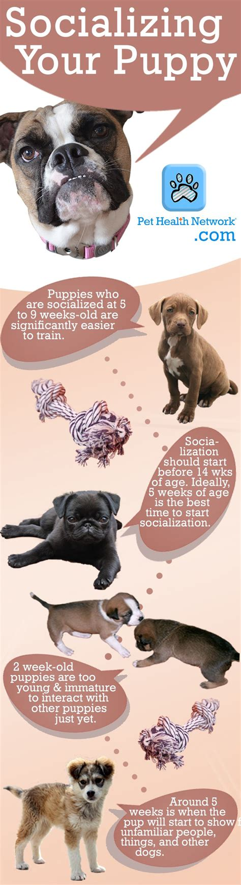 socializing a puppy when getting a new puppy take this into consideration when socializing your pup in