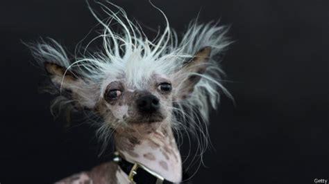 imagenes muy impresionantes image gallery perros feos