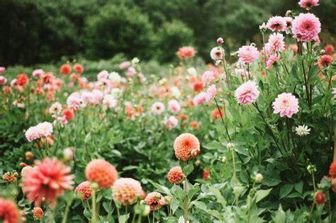 dahlia garden design garden landscape pinterest