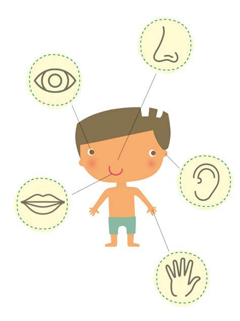 1409540367 le corps humain p tits dessin du corps humain pour enfants