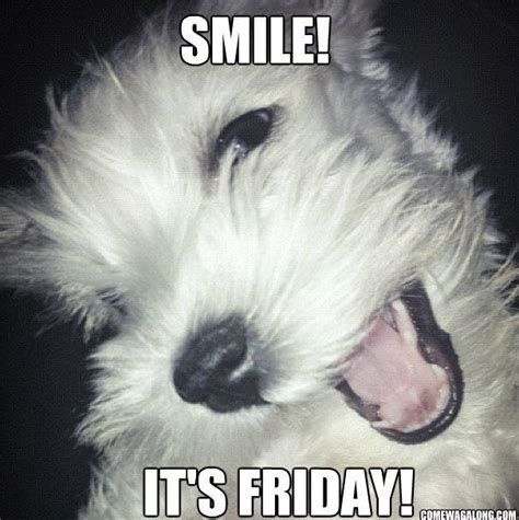 Funny Tgif Memes - thank god it s friday dog edition friday memes come