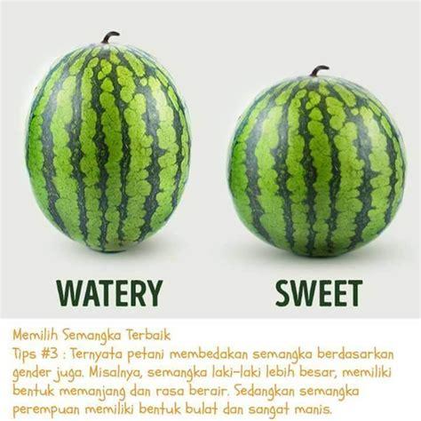 Bijibenihbibit Buah Semangka Lonjong Kuning tips cara memilih semangka yang merah dan manis resepkoki co