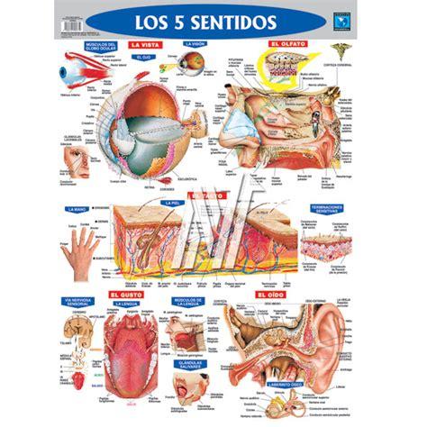 laminas educativas los 5 sentidos los 5 sentidos en laminas educativas los 5 sentidos en