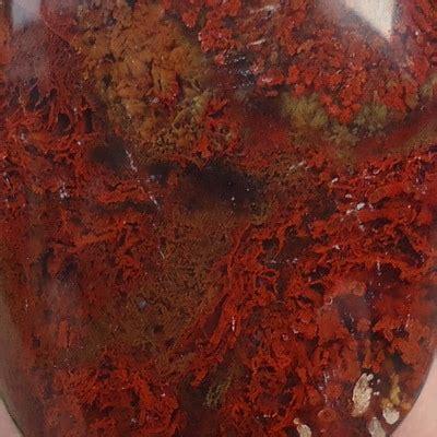 Lumut Merah Spesial mustika badar merah besar pusaka dunia