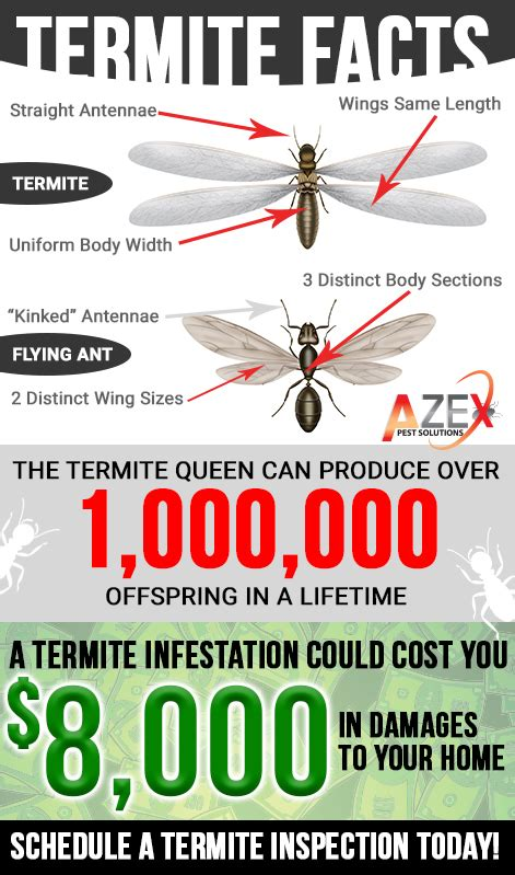 bed bug heat treatment success rate bed bug heat treatment appealing and nice bed bugs nj
