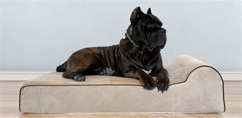 big dogs for sale best beds on sale for small dogs big dogs top tips beds and costumes