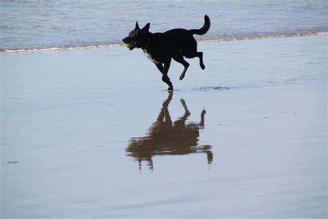 friendly beaches san diego friendly beaches in san diego california beaches