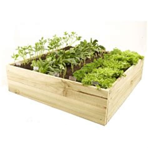 Raised Vegetable Garden Beds Bunnings Garden Product Review Acq Treated Pine Garden Bed