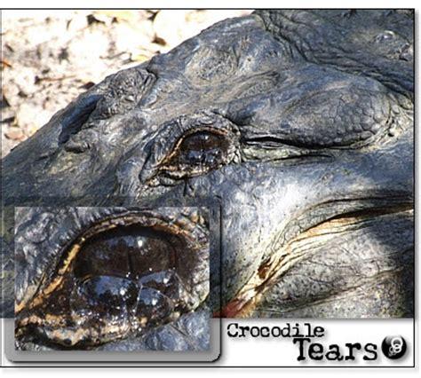 Howard K His Crocodile Tears by Future Less Crocodile Tears 傳說中鱷魚的眼淚