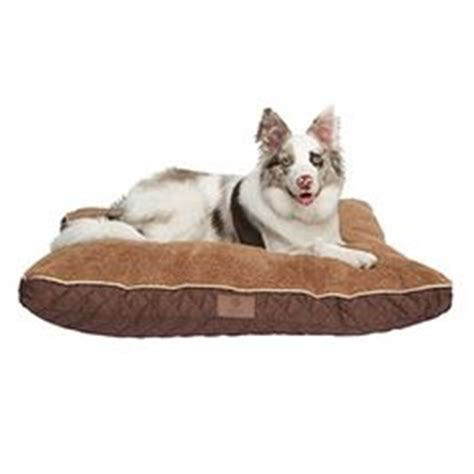 big lots dog beds for my fur babies cocoa bella on pinterest martha