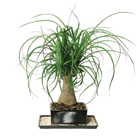 plants for home indoor plants garden plants flowers the home depot