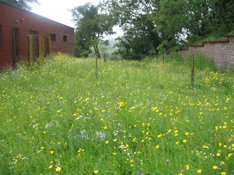 one of my wild flower seed mix landscapes wild flower lawns meadows buy wildflower seeds