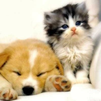 top collection cute cat  dog pictures