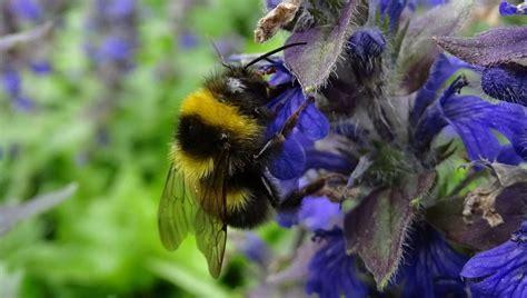 Bienen Rolladenkasten Vertreiben by Bienen Im Rolladenkasten Bievital Apis Mellifera