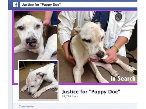 puppy doe grafton gave away puppy doe found tortured in quincy grafton ma patch