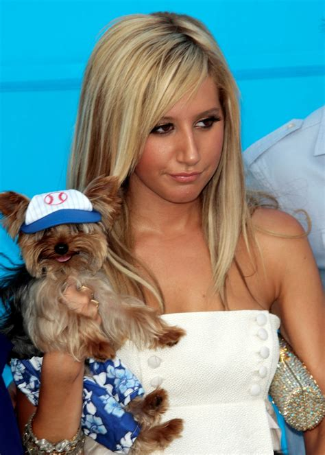 yorkie with a tisdale with a yorkie