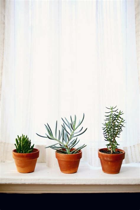 sturdy houseplants popular easy care potted plants interior design ideas avso org