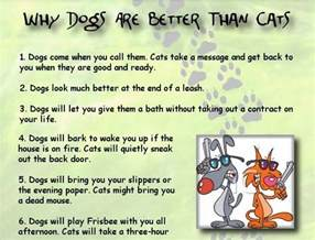 are better why dogs are better than cats motley dogs