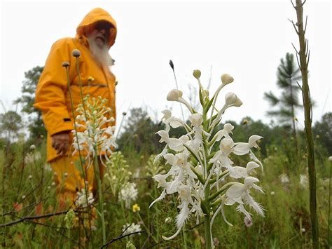 bog men  preserve alabamas  rare orchid species