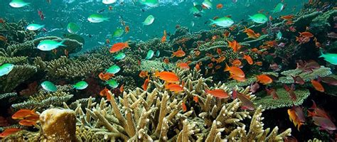 dive holidays fiji diving the best resorts for a
