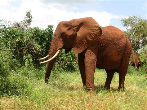 funny animals  africa  desktop background