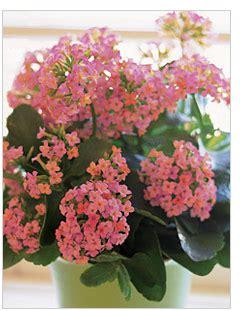 learn   care  house plants teleflora