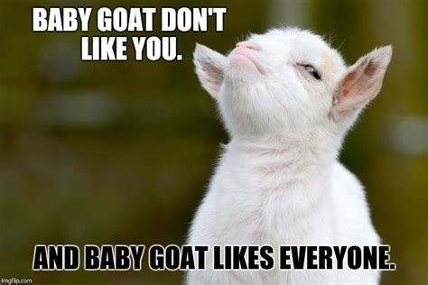Goat Meme - 25 extremely entertaining goat memes sayingimages com