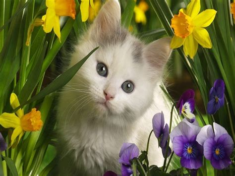 imagenes de flores y animales fonditos gato y flores animales gatos mascotas