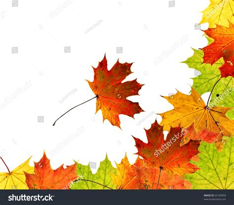 high resolution maple leaf deviantart high resolution colorful autumn maple leaves stock photo