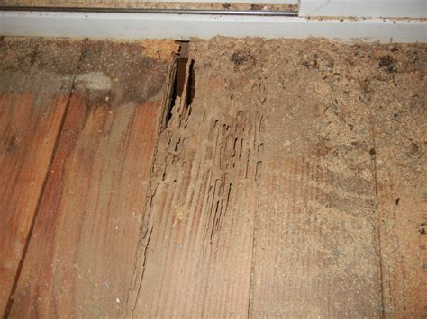 Termites In Furniture by The Easy Methods How To Get Rid The Termites In Your Lovely Furniture Homesfeed