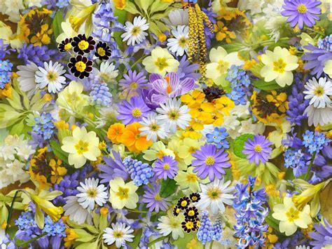 primavera fiori foto gratis fiori di primavera fiori collage immagine