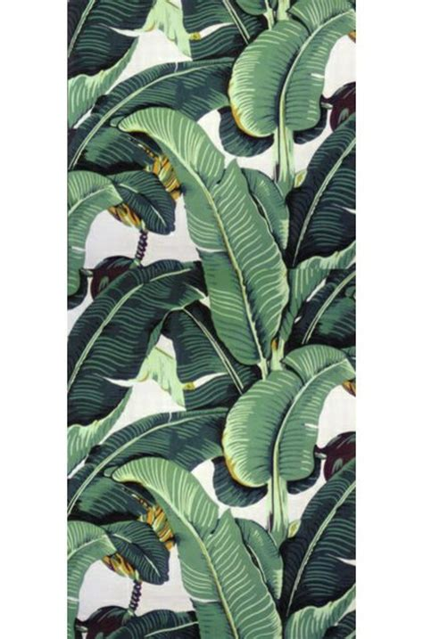 banana palm wallpaper banana leaf botanical illustration hawaii pinterest