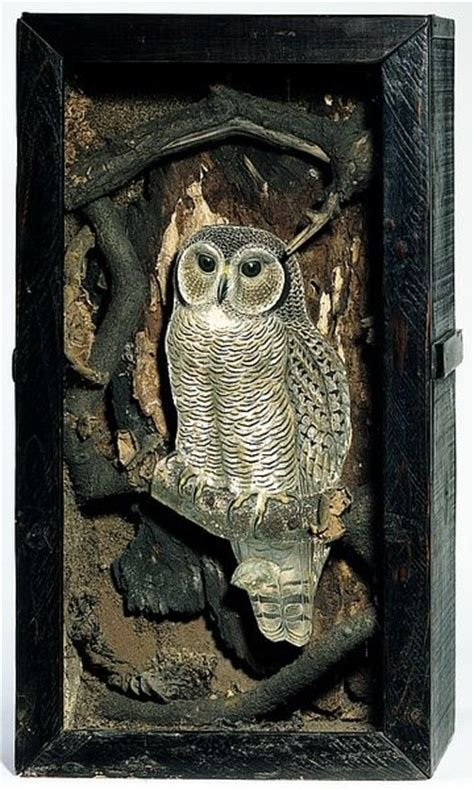 joseph cornell owl box and owl on pinterest