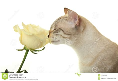 cat sniffing royalty free stock photo image 19318325