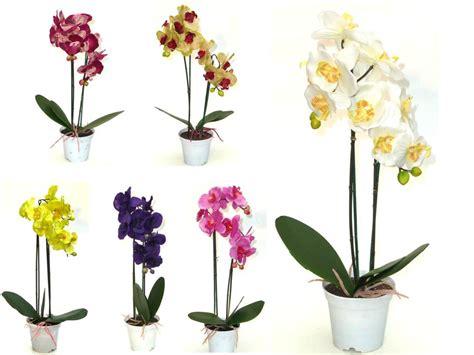 orchidee im topf 1379 orchidee im topf deko orchidee im topf wei 40cm kaufen in