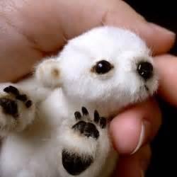 Siberian Down Duvet All The Joy Tuesday 10 Cute Baby Animals