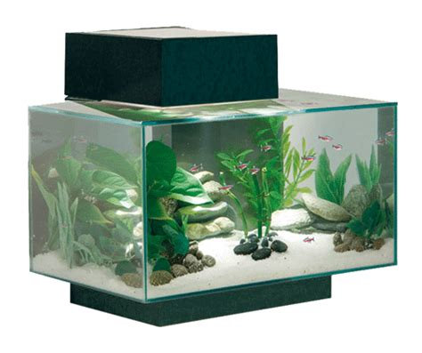 arredamento acquario forum arredamento it mobile per acquario