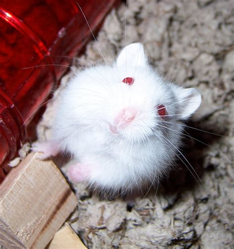 how much is at petco how much are hamsters at petco pictures to pin on pinsdaddy