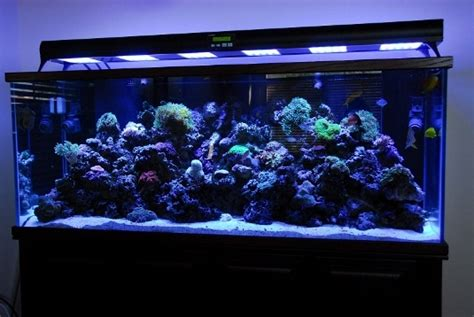 lade a led per acquari luce acquario led acquario