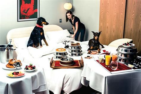friendly hotels chicago the top friendly hotels around the country