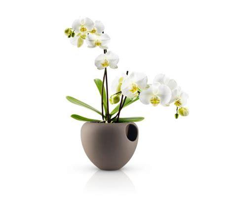 vasi da fiori per interni vasi da interno arredare con stile