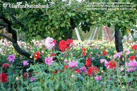 Britzer Garten Dalien by Dahlien Im Britzer Garten Dahlienshow Dahlienfeuer