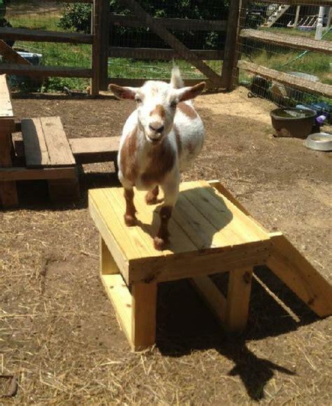 build  platform   goats  stand