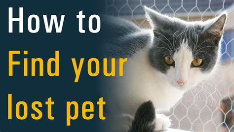how to find a lost be your own pet detective how to find your lost pet