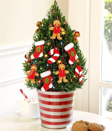 weihnachtsb ume im topf weihnachtsbaum im topf so h 228 lt die tanne l 228 nger weihnachtsdeko ideen zenideen