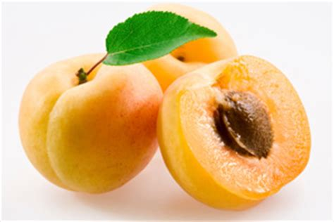 apricots celebrate national apricot day every day with 40 sweet fruity recipes books national apricot day food cdkitchen
