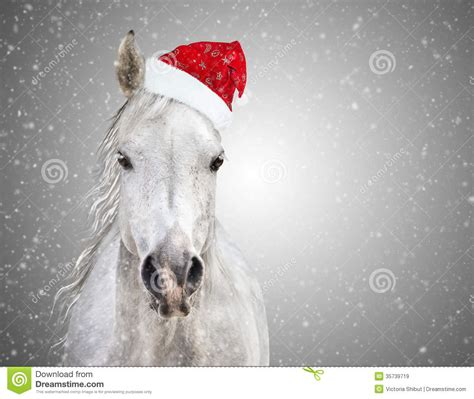christmas wallpaper with horses white christmas horse with santa hat on gray background