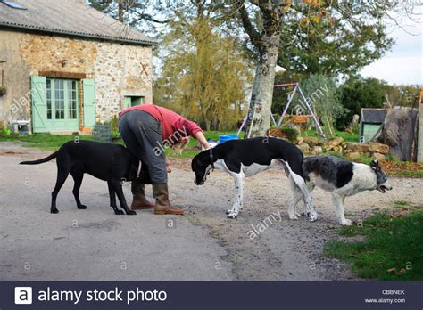 how dogs mate two dogs mating