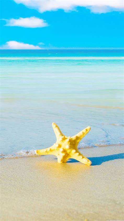 Velly Bintang Laut starfish iphone 6 plus hd wallpaper hd free