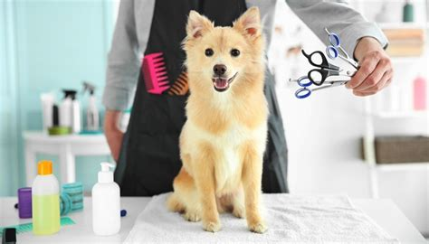 How To Find In Your Area How To Find Local Groomers In Your Area The Easy Way